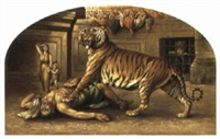 christian martyr devoured by a tiger by w. spilsbury