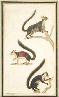 etudes d'animaux (set of 4) by jean gabriel prêtre