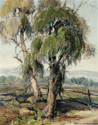 eucalyptus trees in a california landscape by louisa cooke ward