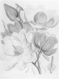 illustrations of himalayan plants (nissen 910; great flower books p.60), by w.h. fitch by joseph (sir) dalton hooker