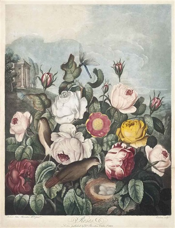 roses from the temple of flora by richard earlom