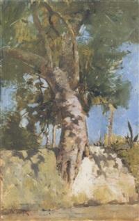 albero solitario by vincenzo volpe