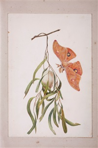 caterpillar of saturnia (+ 20 others; folio of 21)(+ floral study, work on paper; 22 works) by eliza blyth