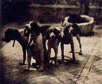 chiens de chasse by louis (comte du manoir) roger du val