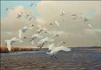 swans by owen j. gromme