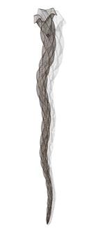 striation by bronwyn oliver