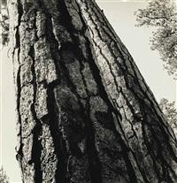 sunlight and bark, 1947 by berenice abbott