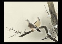 two doves by hoshun yamaguchi