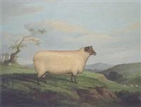 a prize ram in a landsape by h. j. quinton