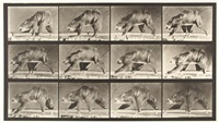 sloth walking suspended on a horizontal pole, plate 750 by eadweard muybridge