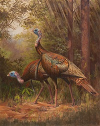 wild turkeys by owen j. gromme