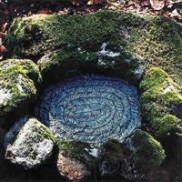 rameaux de douglas, pierres, mousses by nils udo