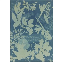 british and foreign flowering plants (from cyanotypes of british and foreign flowering plants) by anna atkins