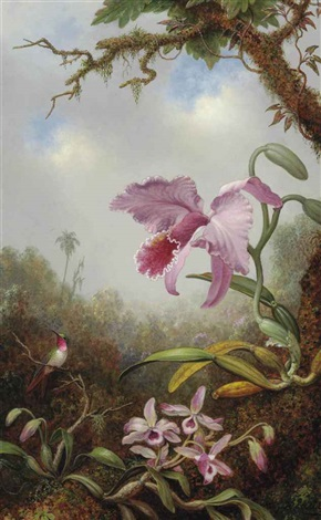 hummingbird and two types of orchids by martin johnson heade