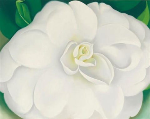 a white camellia by georgia okeeffe