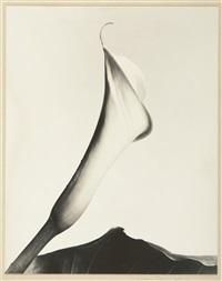 calla with leaf by imogen cunningham