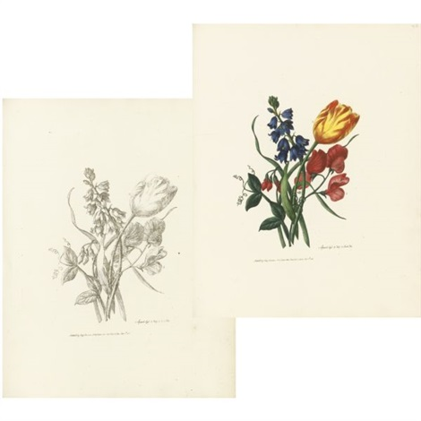 sketches of flowers from nature bk w 11 works folio by mary lawrance