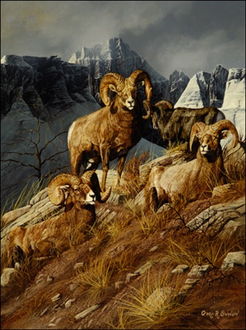 bighorn mountain sheep by gary r swanson
