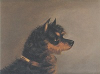 norwich terrier by edwin (of bath) loder