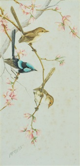 blue wren & two hens amongst blossoms by neville william cayley