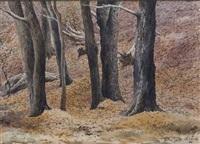 bosque by juan lascano
