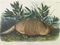nine-banded armadillo, pl. cxlvi (from viviparous quadrupeds of north america) by john woodhouse audubon
