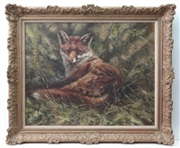 the satisfied fox, a fox licking it's lips whilst lying on a woodland floor by mick cawston