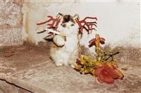 cat smoking, hydra by juergen teller
