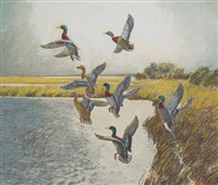 ducks in landing by reveau mott bassett
