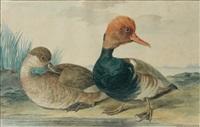 couple de canards siffleurs by aert schouman
