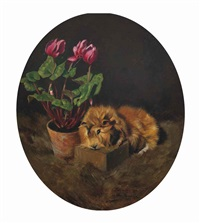 a guinea pig with cyclamen by max spilhaczek