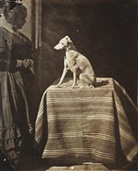 portrait de chien by charles nègre
