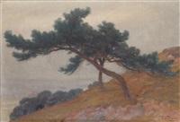 les pins sur la colline, août by louis hestaux