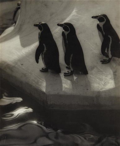 penguins three by eleanor parke custis