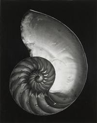 nautilus shell (half) by edward weston
