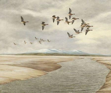 ducks in flight by geoffrey campbell black