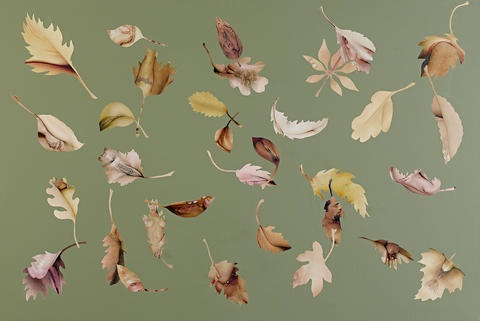 leaf study olive 1 by jonathan yeo