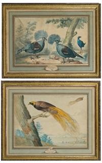 goura - nouvelle - guinée (+ oiseau de paradis; 2 works) by aert schouman
