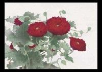 red poppy by koichi nabatame