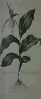 botanique by henri philippe boudier
