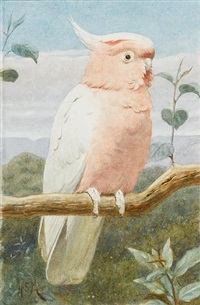 a pink cockatoo by henry stacy marks