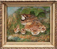 bobwhite quail chicks by wakeman holberton