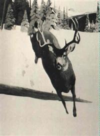 a mule deer in a winter landscape by douglas allen
