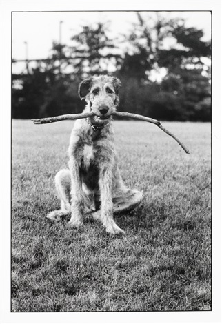 alsatian new jersey by elliott erwitt