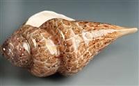 shell by lino tagliapietra