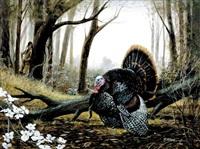 wild turkey by ralph j. mcdonald