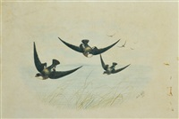 group of swallows in flight by neville henry peniston cayley