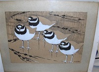 ringed plovers by noel william cusa