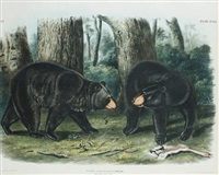 american black bear (+ maryland, marmot, woodchuck, groundhog; 2 works; 1st from quadrupeds of north america, by j.t. bowen) by john woodhouse audubon