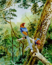 ceylon blue magpies by george morrison reid henry